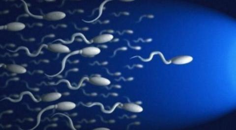 Сперматозоиды помогут ученым в лечении онкологии