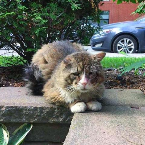 Взгляд этого уличного кота р…