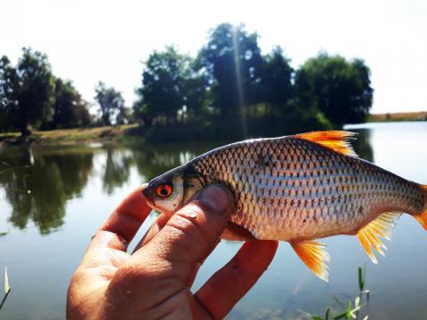 Рыбалка на удочку и фидер на…