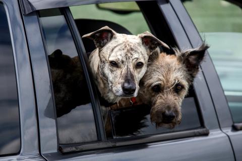 7 мифов о собаках: чего ты не знала про Шарика