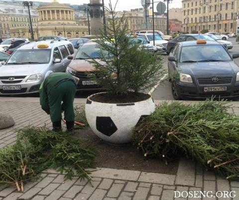 «Озеленение» клумб в Санкт-П…
