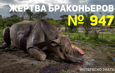9 сильных снимков дикой природы, которые никого не оставят равнодушными