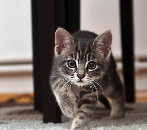 Вот пришел ты домой, а там сюрприз — твоя собака завела себе котёнка...