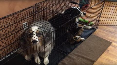 Собаки спрятались в клетки, …