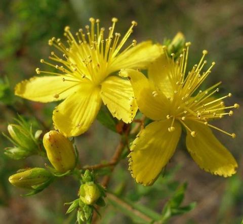 10 растений-талисманов, которые защитят ваш дом от бедности и неприятностей
