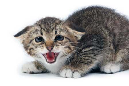 КОШКИН ДОМ. Стрессовые состояния у кошек