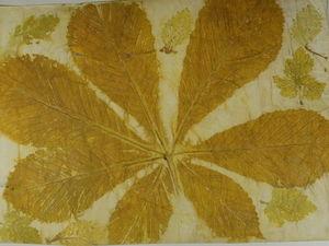 Как сделать принты растений на бумаге
