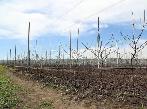 План по закладке садов в Дагестане перевыполнен более чем в 2 раза