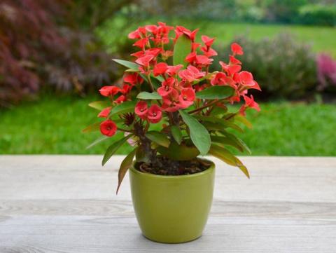 Топ 10 домашних цветов, которые нас убивают
