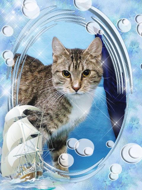 Санкт-Петербург!!! Приглашаем на выставку-пристройство котов и кошек «Коты-мореходы 5: весенняя навигация»!