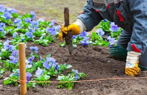 Какие растения можно пересаживать весной?