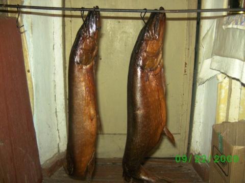 №539. Способы засолки рыбы для копчения.