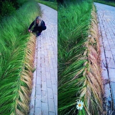 Когда нет газонокосилки