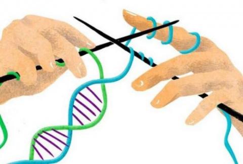 Факты из мира генетики: идио…