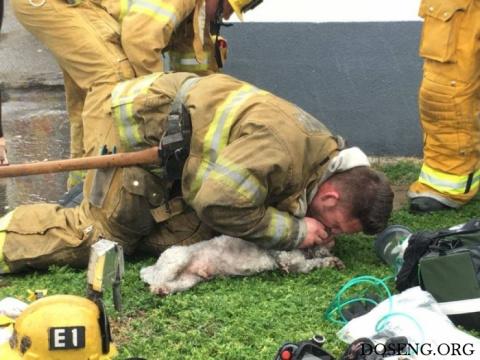 Пожарный реанимировал собаку…