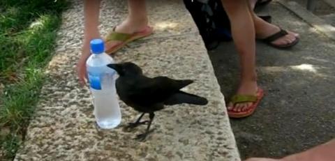 Птичку одолевала жажда и она…