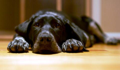 ТЕРЕМОК. Об упрямой собаке
