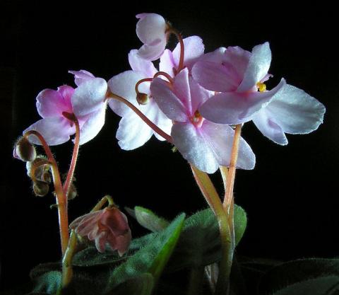 Шаблоны, картинки, трафареты - цветы и насекомые