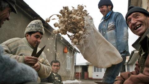 Почему в Румынии любят чеснок?