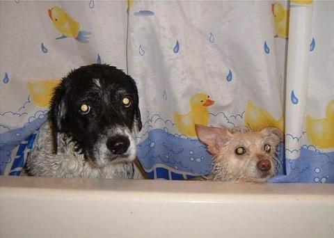 Домашние любимцы принимают ванну