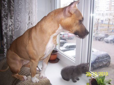 -Смотри сынок,там можно гонять кошек!!!
