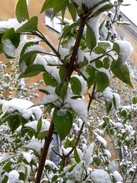 Поздний снег