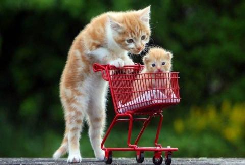 100 лучших фотографий кошек …