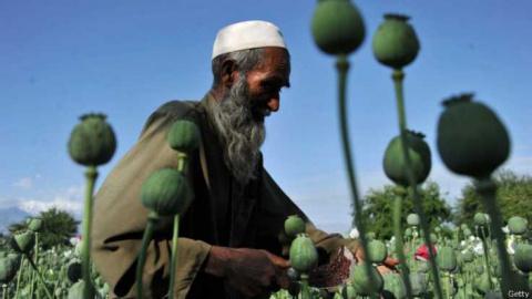 Производство опия в Афганист…