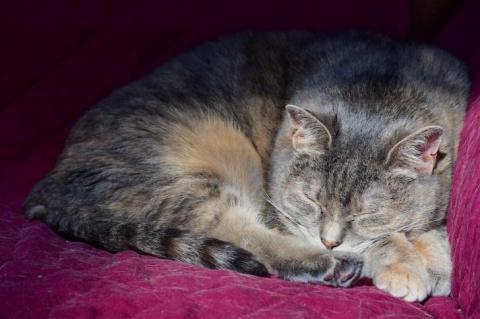 Суровый, бездомный кот оказа…