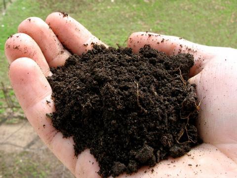 Выращивайте почву – ягоды вырастут сами!