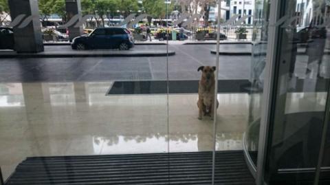 Уличный пес полгода встречал…