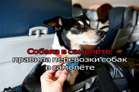 Как перевозить собаку в самолете. Лебединое счастье.... (очень трогательный рассказ)