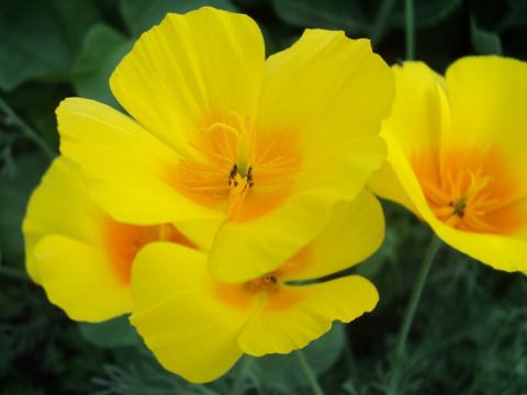 Мой цветник 2012