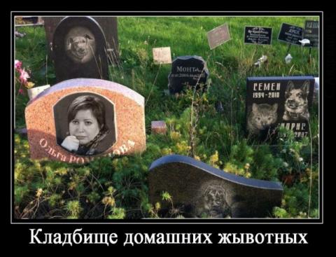 Журналист -отморозка Романова ответит за «кладбище домашних жывотных»