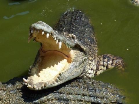 Крокодилы съели изображавшего Иисуса Христа священника.