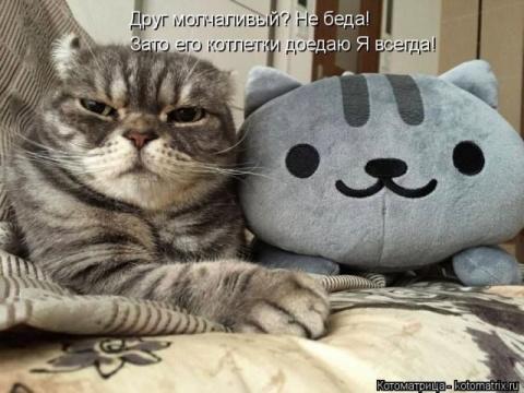 Смешные котоматрицы для хоро…