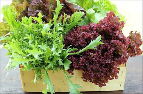 Листовой салат зимой