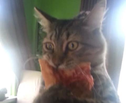 Кот и пицца)