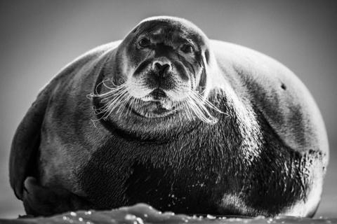 Обитатели Севера в поэтичных чёрно-белых фотографиях Laurent Baheux