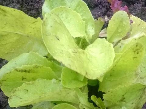 Что посадить в огороде в июле? Посадка овощных культур и зелени