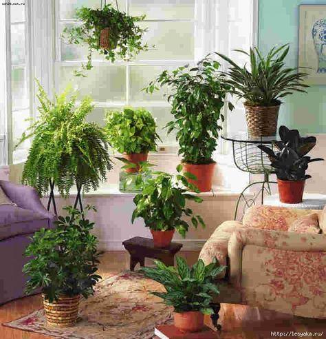 Домашние растения для здоровья семьи