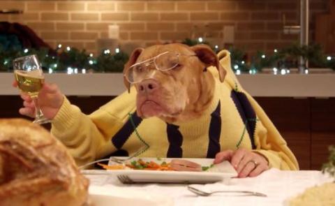 Званый ужин по-собачьи