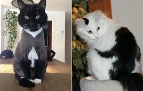 20 фотографий кошек весьма неожиданных окрасов, которые обязательно вызовут улыбку