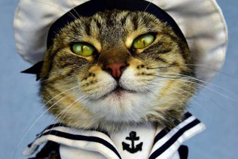 Потрясающая история о коте, …