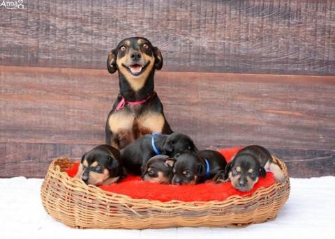 Собаки, которые гордятся сво…