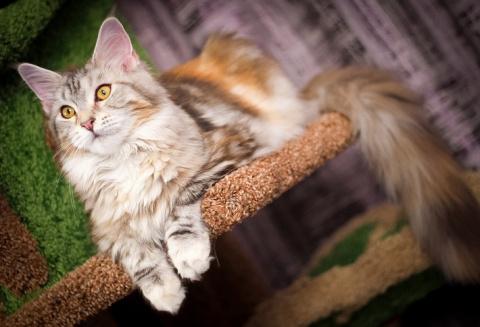 Слишком навязчивые кошачьи л…