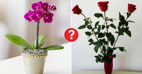 Какие цветы можно дарить, а …