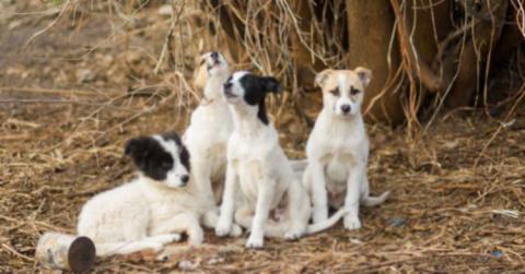 Четыре бездомных пса защищал…