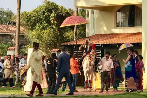 Как выглядит настоящий жених на белом коне в Индии