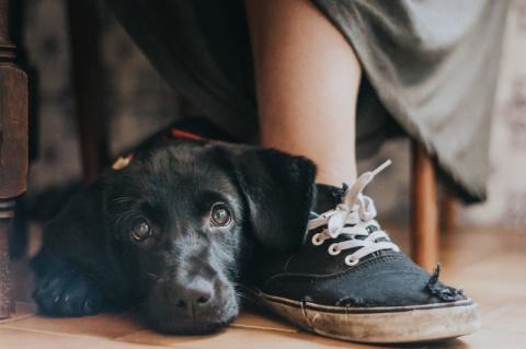 Лучшие собачьи фотографии - 2017